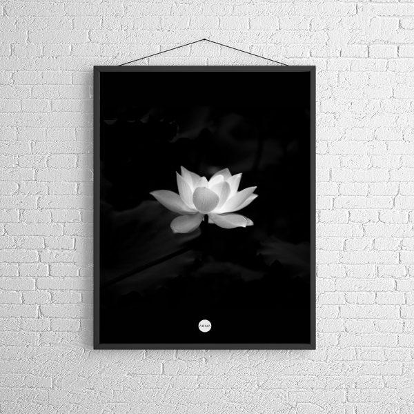 Die weiße Lotusblüte